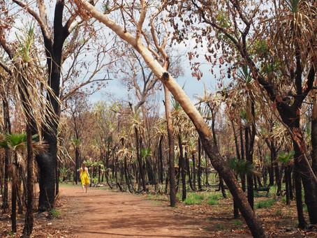 Kuidas Austraalia jaksab oma metsi põletada?