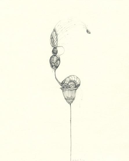 snailflower.jpg