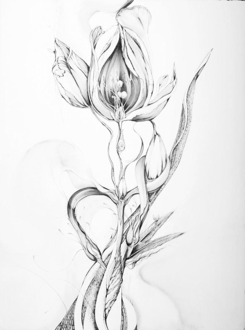 Between Tulips.jpg