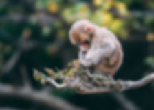close-up-photo-of-monkey-on-tree-branch-