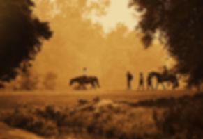 horsesPeopleWalk_edited.jpg