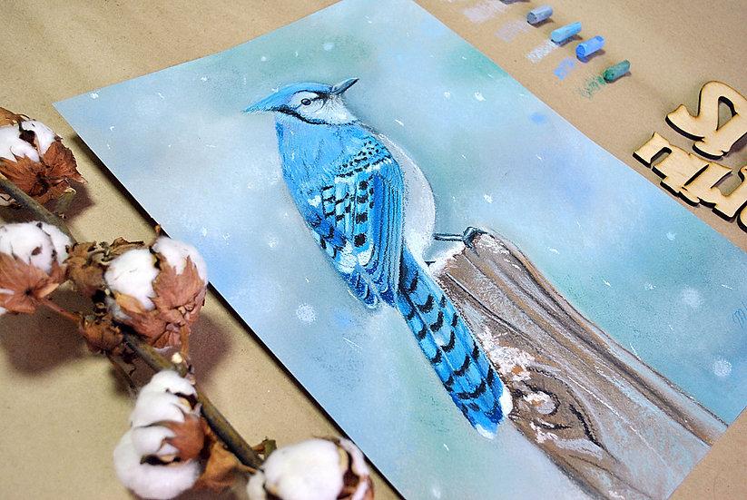 """""""Blue jay"""" (голубая сойка) картина пастелью"""
