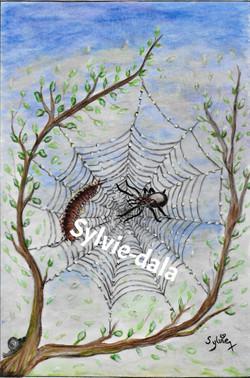 Le mille -pattes et l'araignée