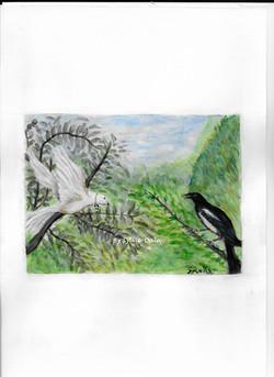 La colombe et la pie