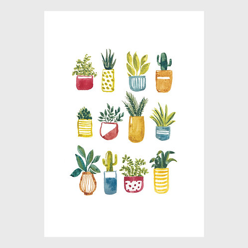 Twelve Pot Plants