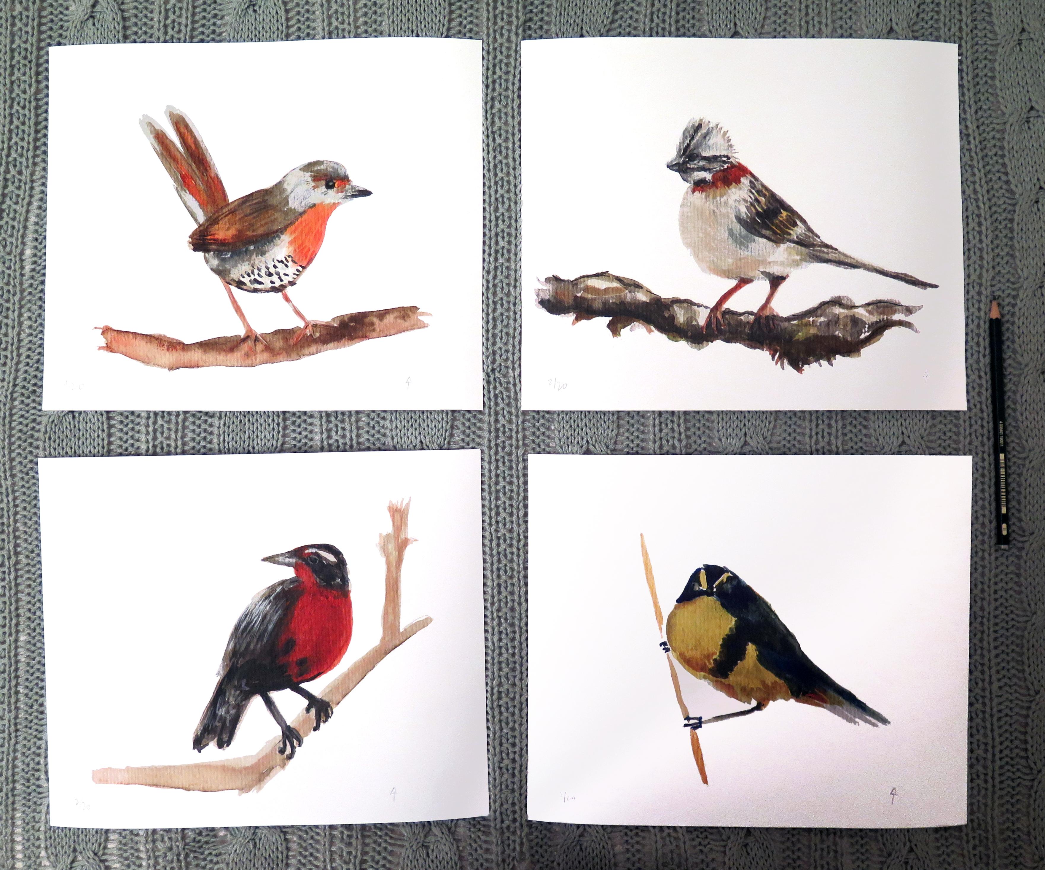 Kit pájaros chilenos (grande)