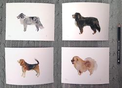 Kit perros