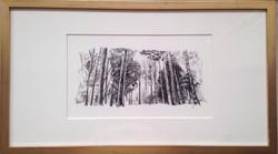 Bosque rapidograph