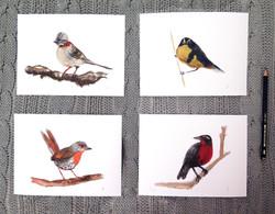 Kit pájaros chilenos