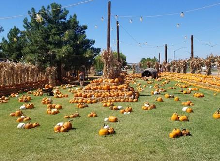 Pumpkin Patches and Fall Festivals Phoenix, AZ 2020