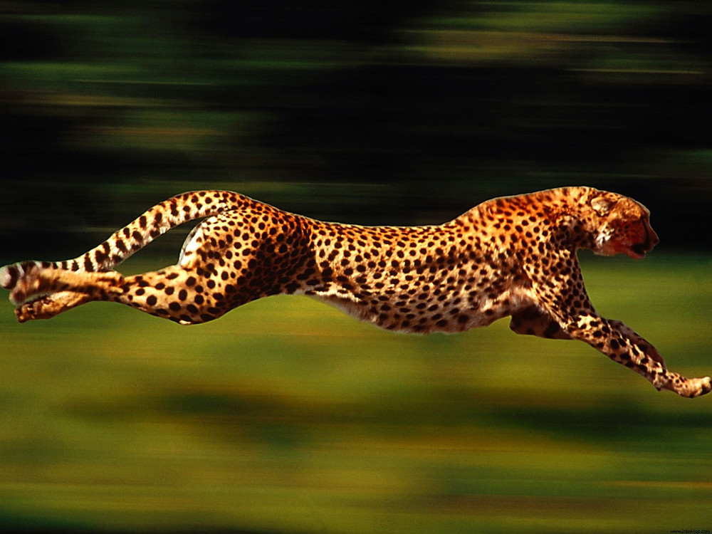 speed-run1.jpg