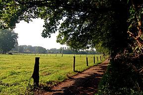 Waldweg in Nettetal. Wandern, Joggen, Radfahren.