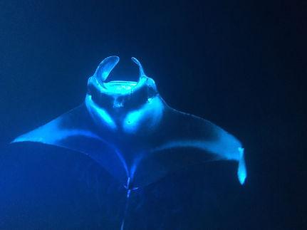ナミノリプロダクションでイルカとサーフィン