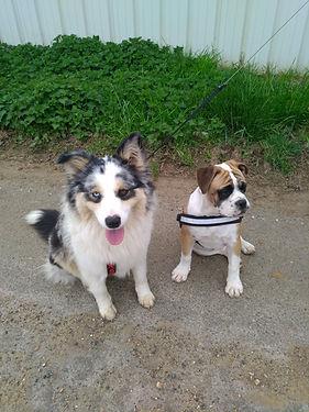 Balades de nos pensionnaires les chiens