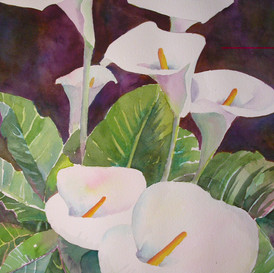 Calla Lilies (Sold)