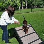 Dog Park 2.jpg