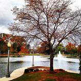 Tree memorial.jpg
