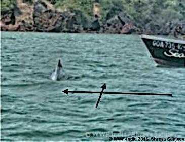 WWF rapport Whale Watching Goa 2016 - im