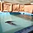 SCS Cetadoc Captivité