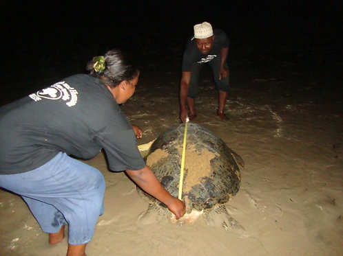 SCS Swiss Cetacean Society Action Tortues vertes Comores Salaire six mois ecogarde