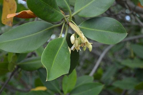 Don libre pour soutenir le projet Mangrove (à partir de 10 CHF)