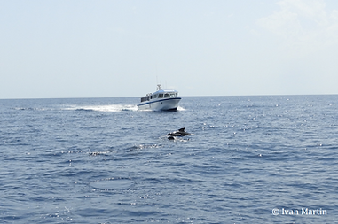 Ecolabel Whale Watching SCS