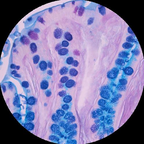 Альциановый синий-ШИК-реакция