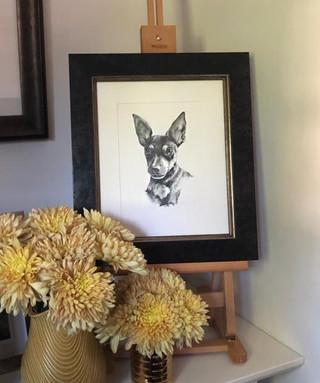 'Saffy', framed
