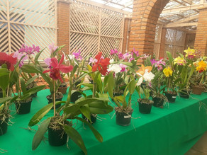 Feira de orquídeas no Orquidário