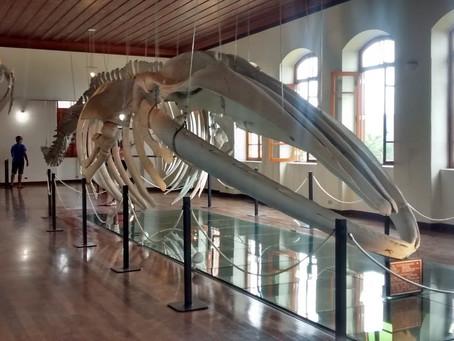 Museus de Pesca e Pelé são pontos de parada da Linha Conheça Santos no fim de semana