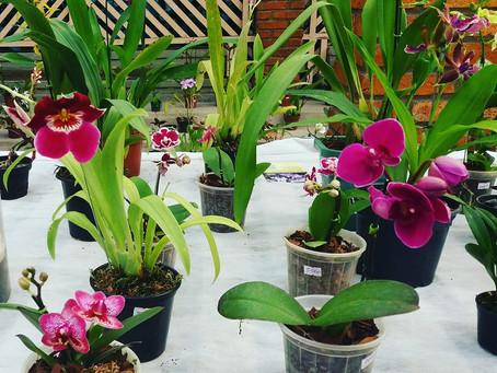 Exposição e Feira de Orquídeas no Orquidário