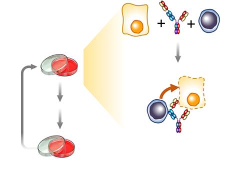 Desvendando o processo de Resistência tumoral adquirida através da modulação da resposta a IFNg