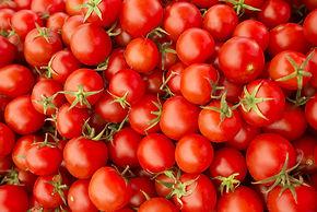 QSCC Tomatoes