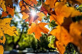 Happy Fall and Harvest Season!!