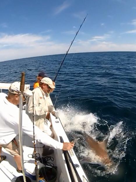 Shark Whip.PNG