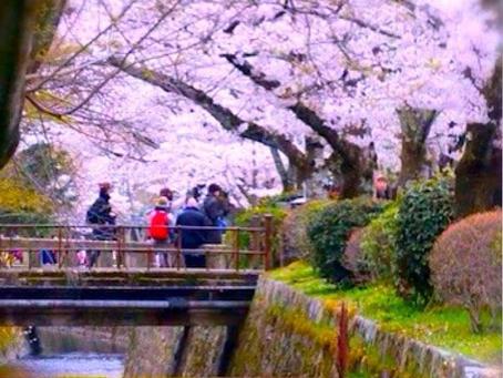 春の京都ヨガリトリート in 哲学の道