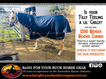 bang-for-your-buck-horse-gear-1200-denie