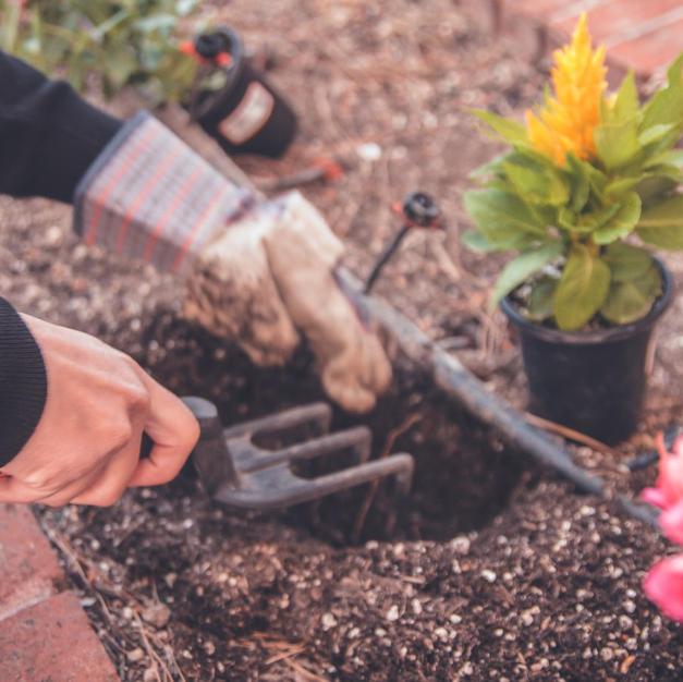 Planting in the Sensory Garden
