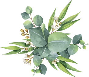 kisspng-eucalyptus-polyanthemos-watercol