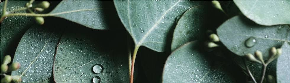 2017_INGREDIENTGARDEN_EUCALYPTUS_BANNER_