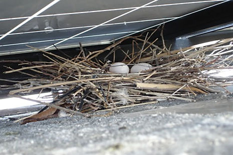 pigeon nest.jpeg