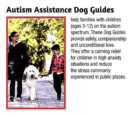 Autism assistance dog.jpg