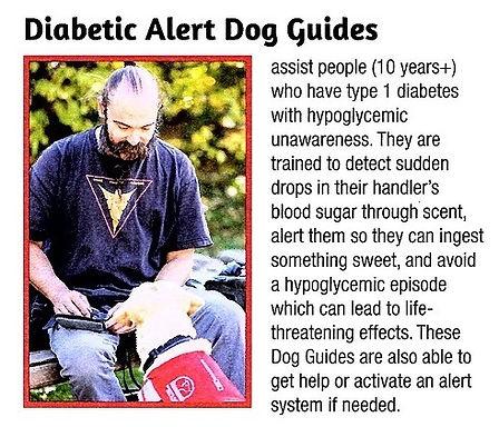 diebetic alert dog.jpg