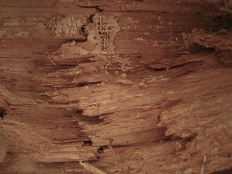 wood 3.JPG