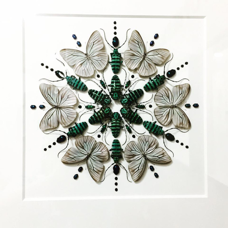 For the Love of Insects!