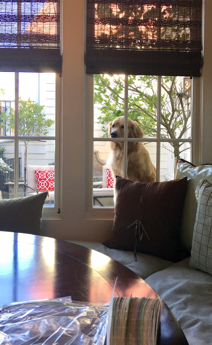 How much is the doggie In the window