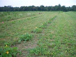 squash pumpkins cucumbers watermelon