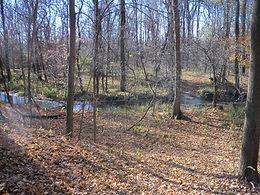 creek that runs through the woods