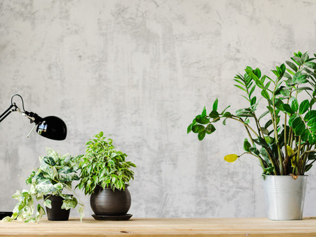 Go Green: Increase Productivity by Adding Plants to your Workspace