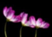 flowers-2708995_960_720.png